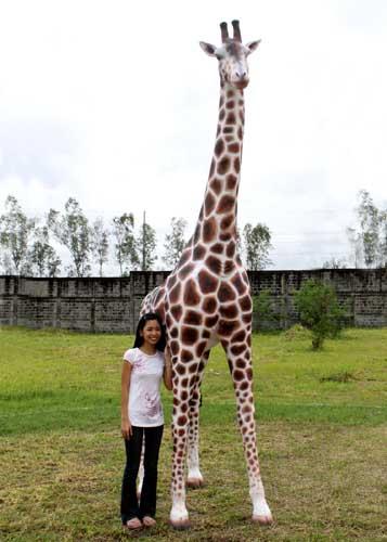 Giraffe 12 Ft Giraffe 12 Ft Gir090070h 2 499 99