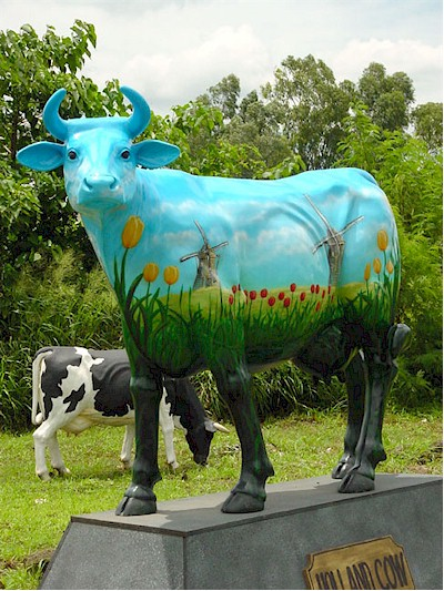""" Holland "" Cow (with or without Horns)"
