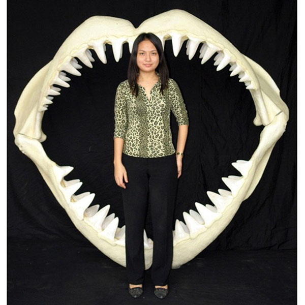 Great White Shark Jaws ( Large )